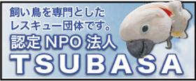 tsubasa-04